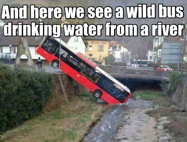 and here we see a wild bus drinking water from a river, meme, accident, lol