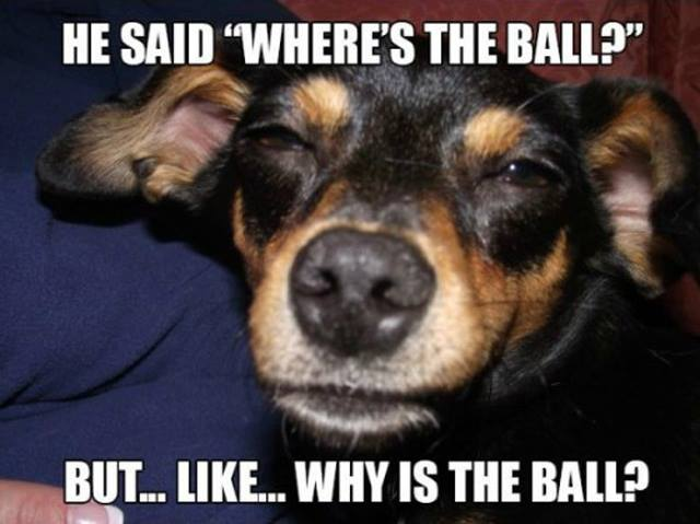 he said where is the ball?, but like why is the ball?, stoned dog, meme