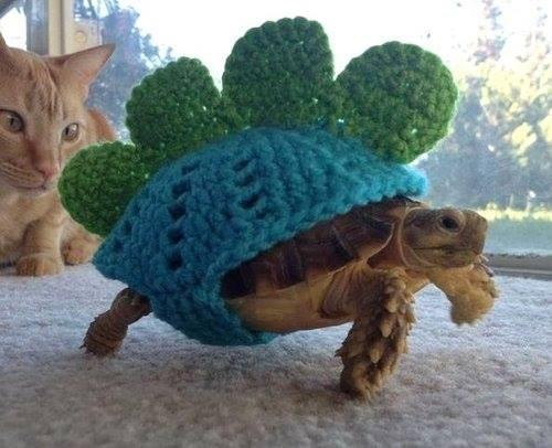 warm turtle is warm, wool dinosaur costume on a turtle
