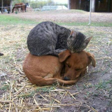 cat sleeping on top of dog sleeping, cute