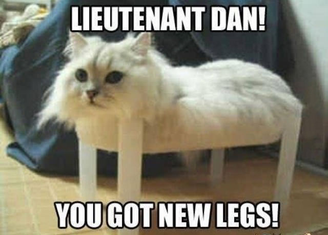 lieutenant dan, you got new legs!, cat on small table looks like the table legs are his own