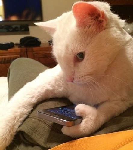 meanwhile in an alternate universe, but also this universe, cat with thumb using an iphone