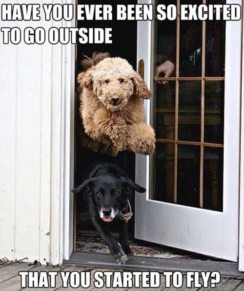 have you ever been so excited to go outside that you started to fly, dogs rushing out an open door, timing