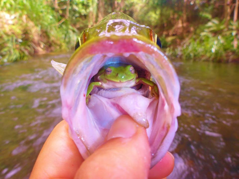 this is one lucky frog!, photographer angus james was fortunate enough to capture this shot