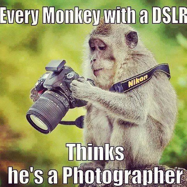 every monkey with a dslr thinks he's a photographer, meme
