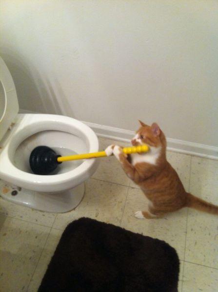 Plunging Toilet Cat Plunging Toilet