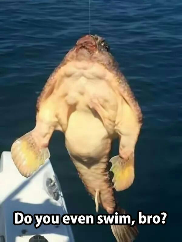 do you even swim bro?, ridiculously muscular fish, meme