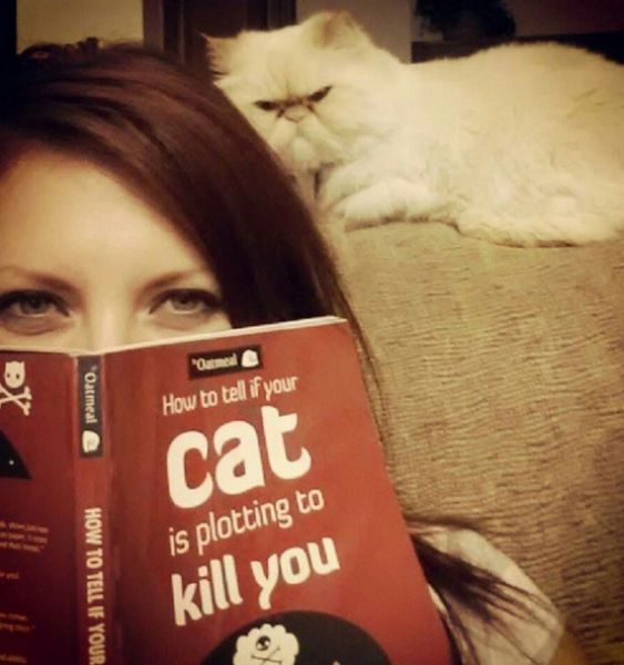 how to tell if your cat is plotting to kill you, really angry stare from a cat