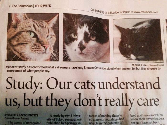 study says our cats understand us, but they don't really care, newspaper