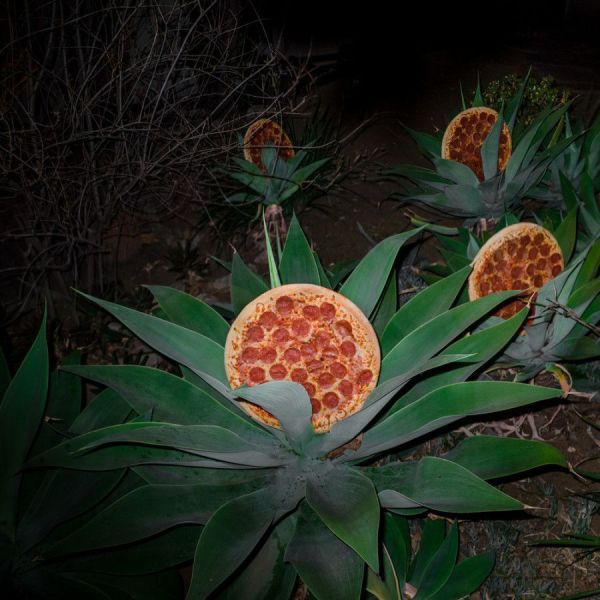 behold the beautiful and rare pizza bush, wtf