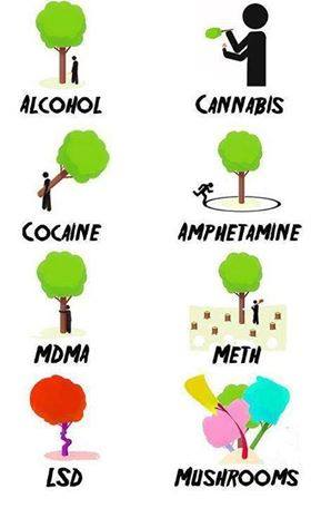 a tree and various drug effects, alcohol, cannabis, cocaine, mdma, amphetamine, meth, lsd, mushrooms