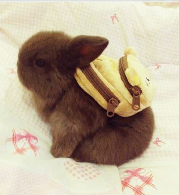 ok mom i'm ready for school, little bunny with a tiny back pack