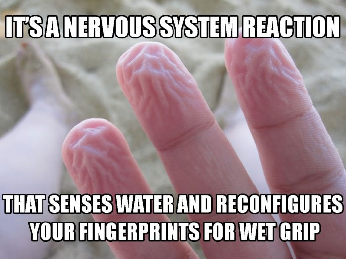 it's a nervous system reaction, that senses water and reconfigures your fingerprints for wet grip, meme, good guy evolution