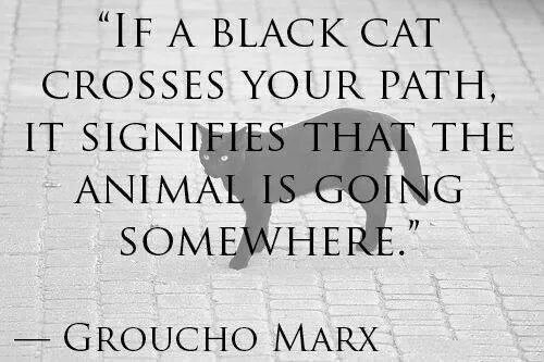 if a black cat crosses your path, it signifies that the animal is going somewhere, groucho marx