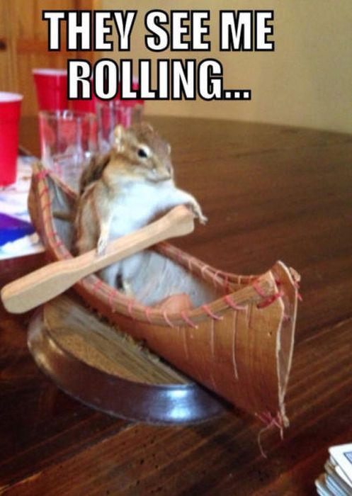 they see me rolling, squirrel in a tiny canoe, wtf, meme