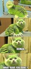 human what have you done?, cat painted and hair cut to look like a lizard