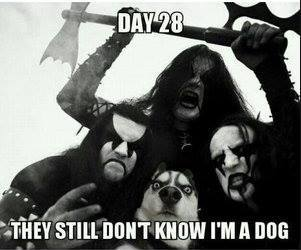 day 28 they still don't know i am a dog