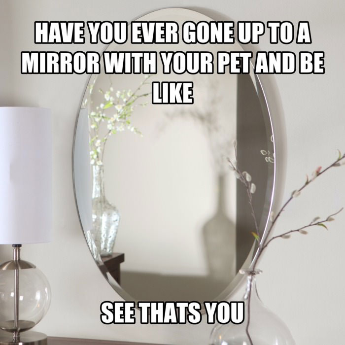 have you ever gone up to a mirror with your pet and be like, see thats you