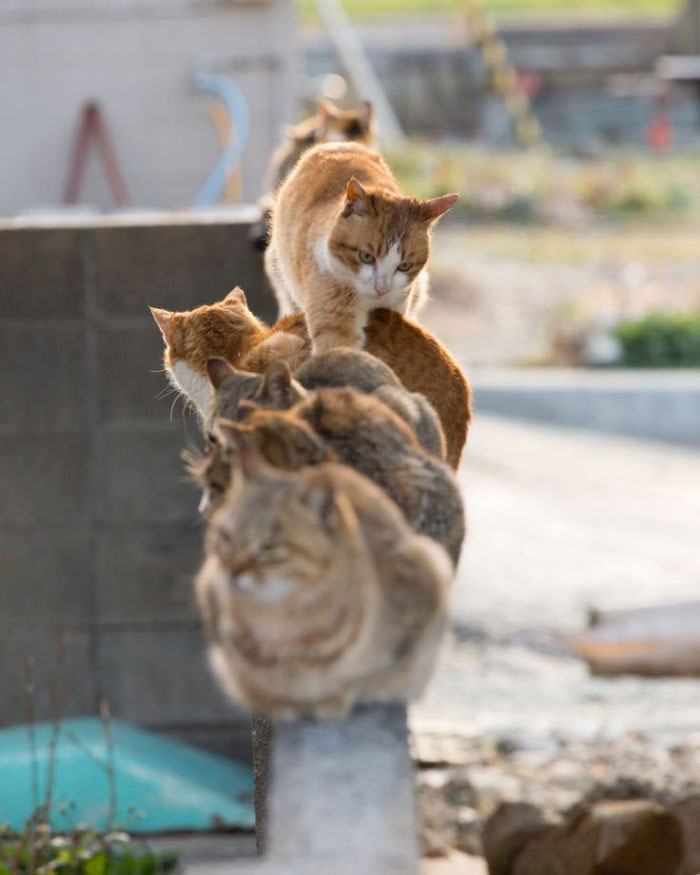 cat climbing over other cats on a fence