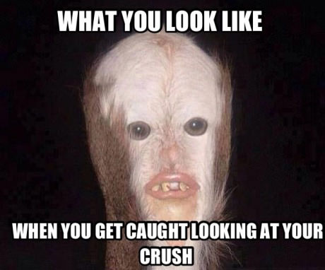 what you look like when you get caught looking at your crush, meme, wtf