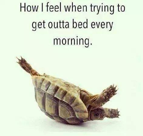 how i feel when trying to get out of bed every morning, turtle on it's back