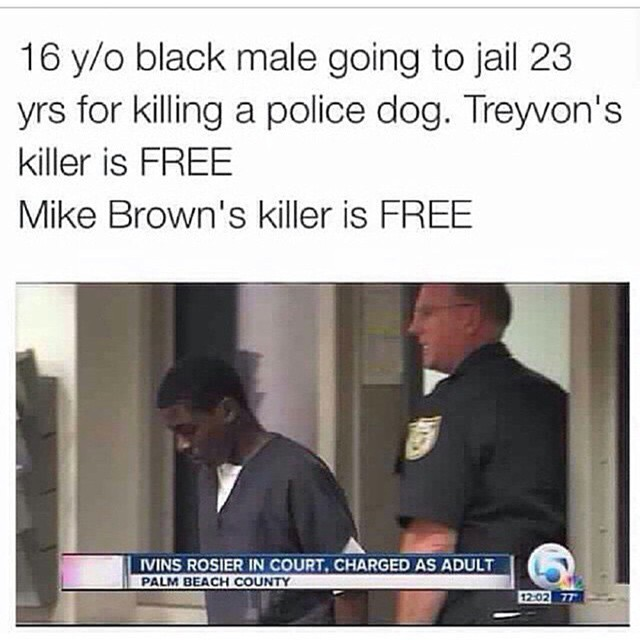 16 year old black male going to jail 23 years for killing a police dog, treyvon's killer is free, mike brown's killer is free