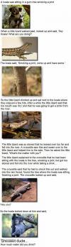 a koala was sitting in a gum tree smoking a joint, joke, story, lizard, crocodile, lol