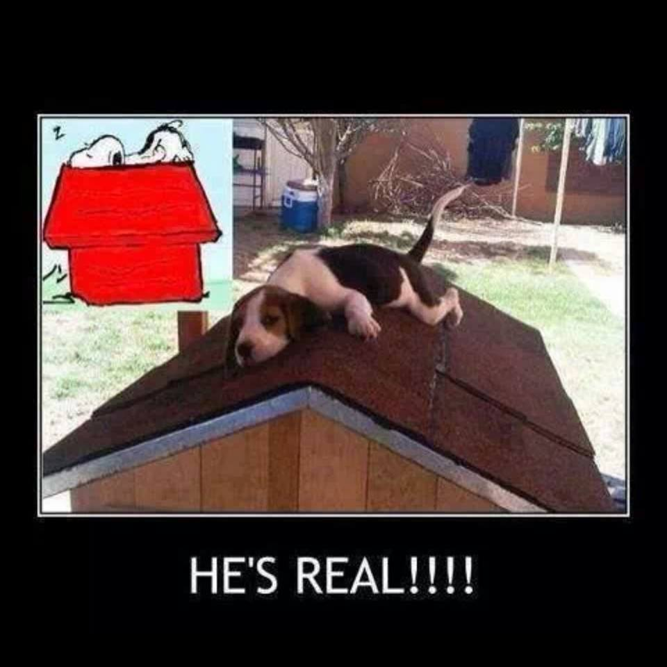 snoopie is real!, motivation, dog sleeping on top of dog house