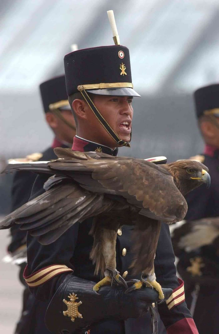 this picture means freedom, solider holding an eagle