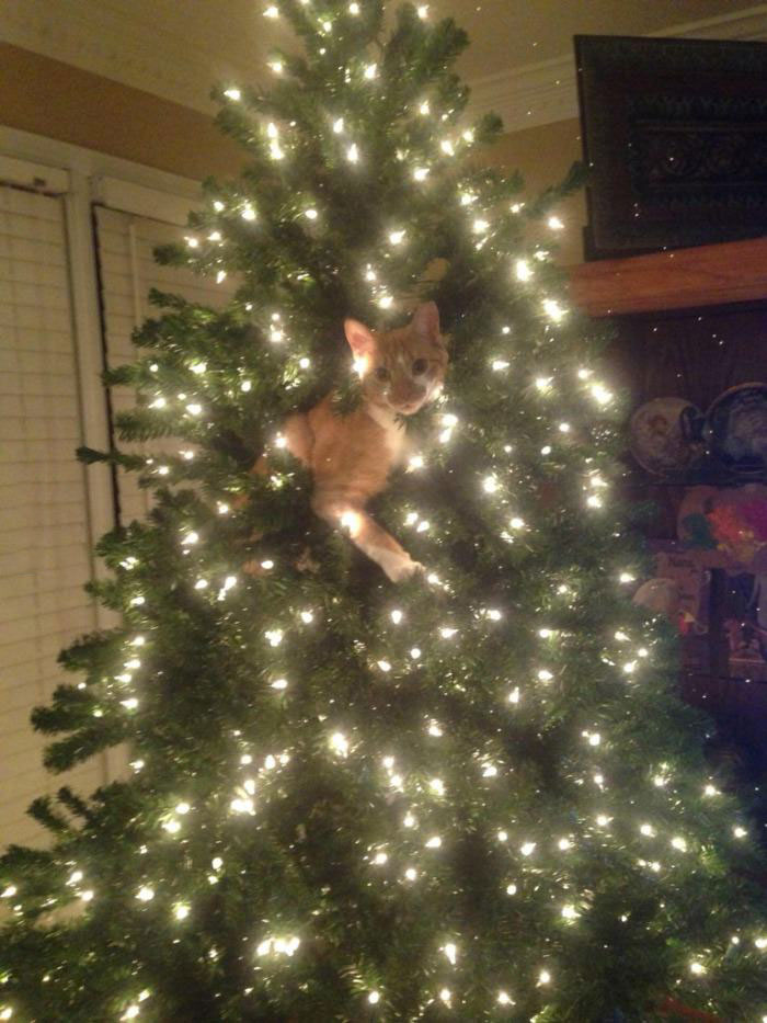 check out my new cat ornament, hey wait, christmas tree
