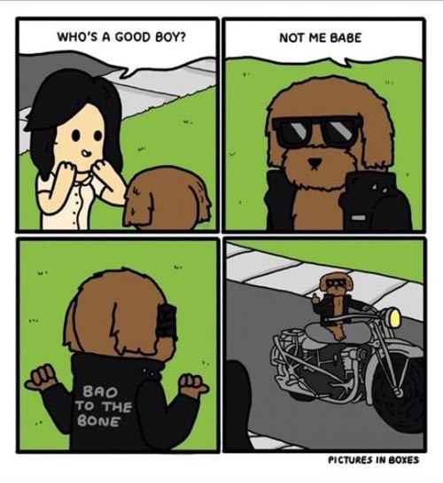 who's a good boy, not me babe, bad to the bone, dog wearing leather jacket, comic