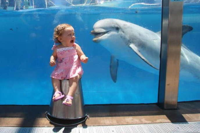 this little girl is not as happy to see this dolphin as he is to see her