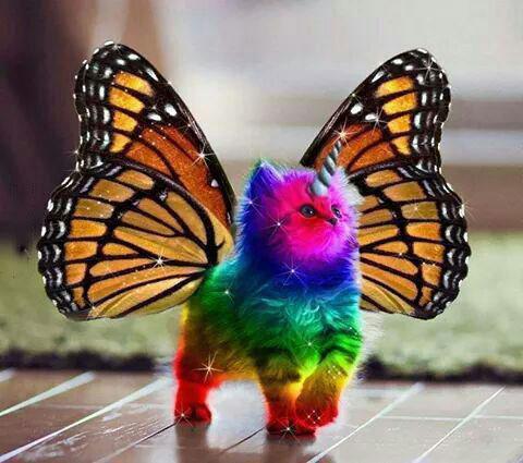 epic butterfly rainbow unicorn kitten