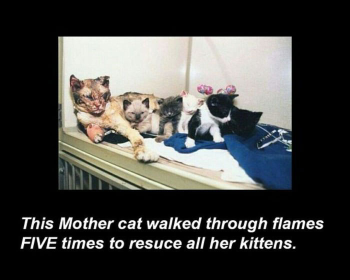 this mother cat walked through flames five times to rescue all her kittens, and they say that cats are assholes