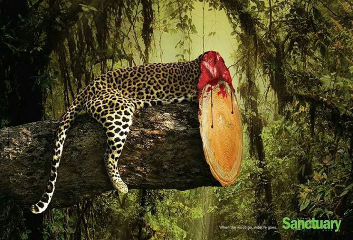 when you cut down the rainforest, you might as well be cutting down the animals that live there