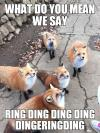 what do you mean we say ring ding ding ding dingeringding, what does the fox say