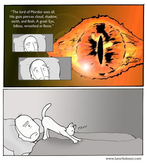 the eye os sauron, as portrayed by your cat's anus
