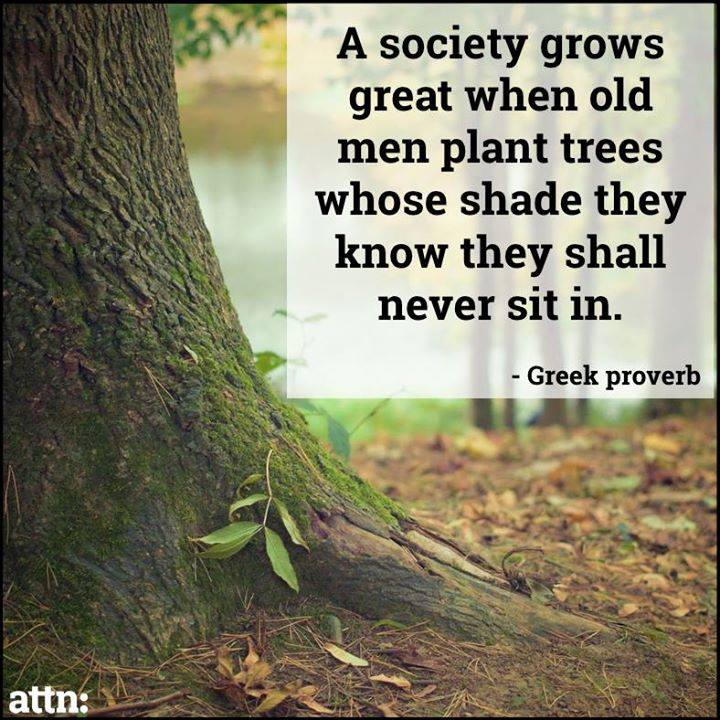 a society grows great when old men plant trees whose shade they know they will never sit in