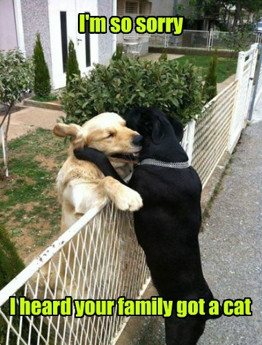 i'm so sorry, i heard your family got a cat, dogs hugging over fence