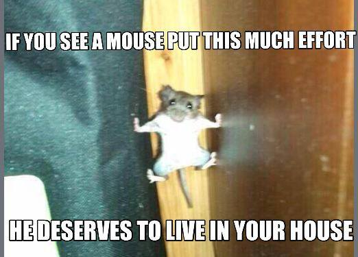 if you see a mouse put this much effort, he deserves to live in your house