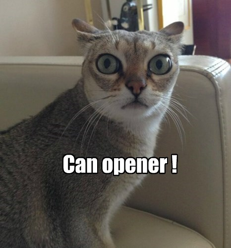 can opener, cat with ears drawer back and eyes wide, meme