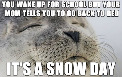 you wake up for school but your mom tells you to go back to bed, it's a snow day, best feeling seal, meme