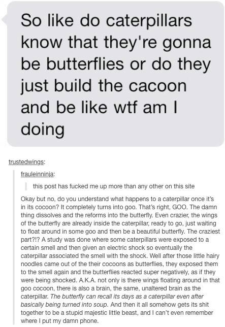 so like do caterpillars know that they're gonna be butterflies or do they just build the cocoon and be like wtf am i doing, they turn into goo