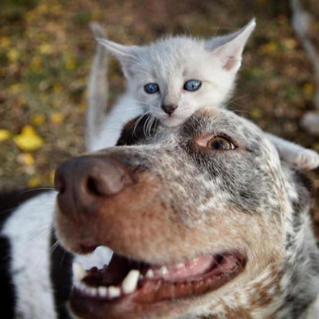 kitten playing with a dog, cute animals