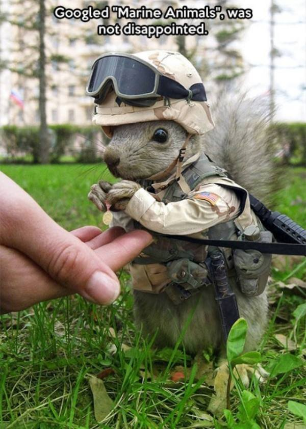 googled marine animal and was not disappointed