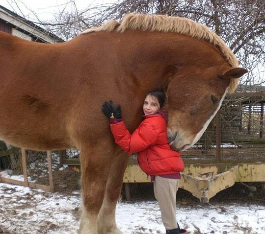 ridiculously large horse or tiny girl?