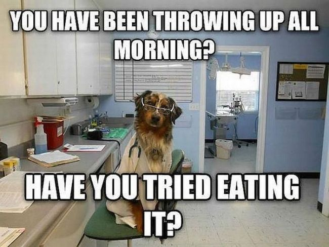 you have been throwing up all morning?, have you tried eating it?, doctor dog, meme