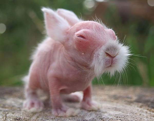 baby wombats look like old chinese kung fu masters
