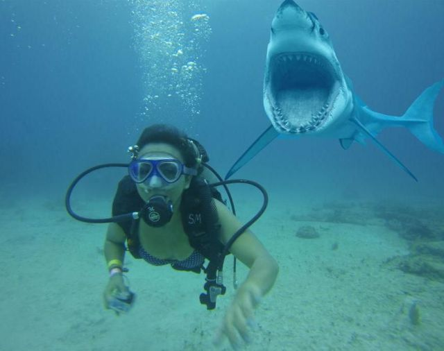 scuba diving girl photobombed by a shark