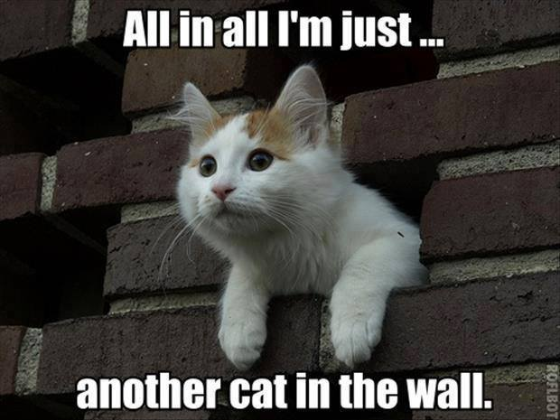 all in all i'm just another cat in the wall, meme